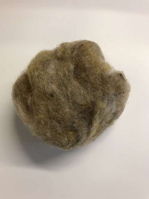 Wheat Carded Wool